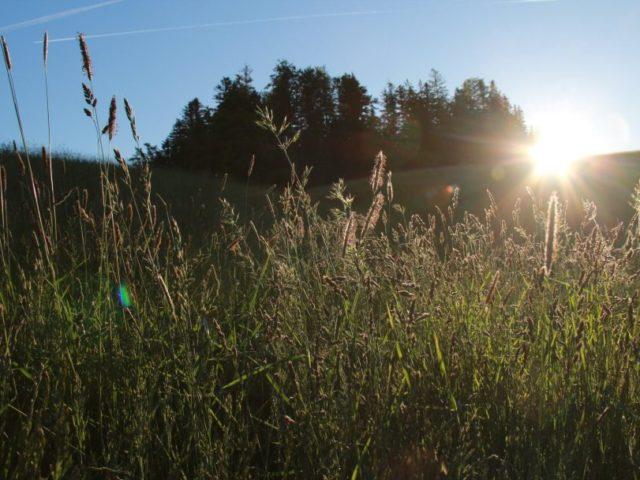 Moorwanderung in Krumbach